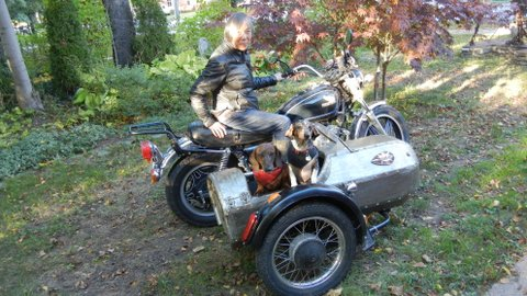 Home built sidecar on Velorex frame & dogs