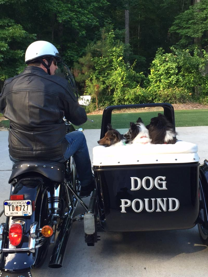 Michael O. with Dogs in Motorvation Sidecar